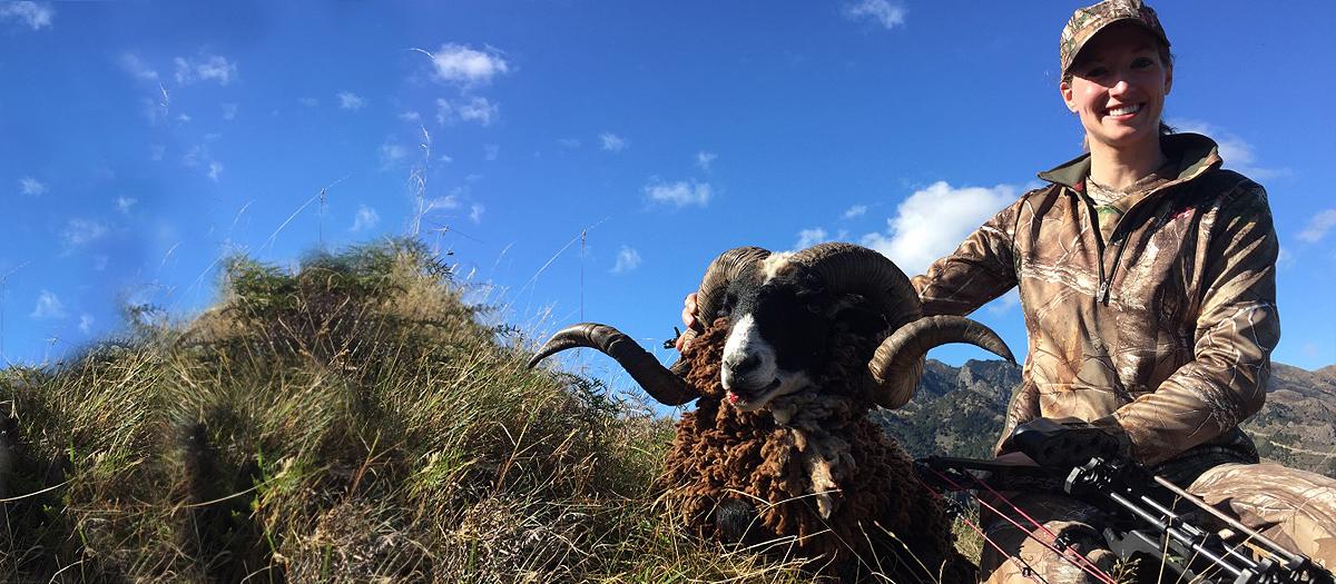 sheep-slide
